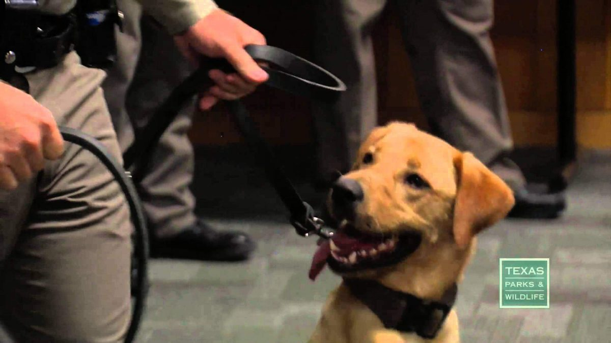 Texas Game Wardens Commission 10 New K-9s
