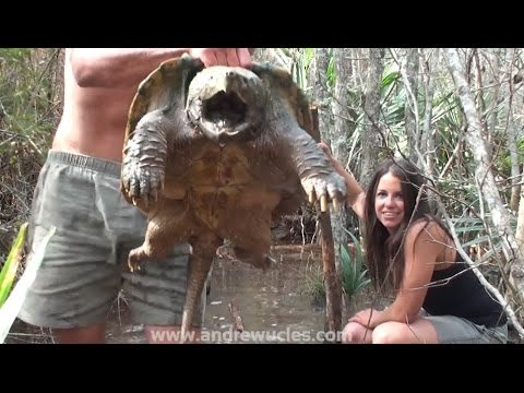 WATCH: Australian Man Catches Alligator Snapping Turtle with His Bare Hands