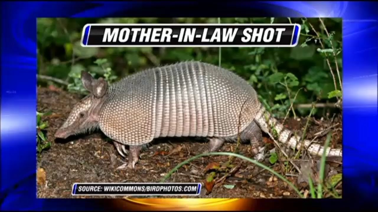 WATCH: Man Shoots Armadillo, Bullet Ricochets and Hits Mother-in-law