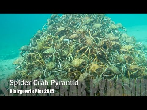 WATCH: This Spider Crab Pyramid Will Make Your Skin Crawl
