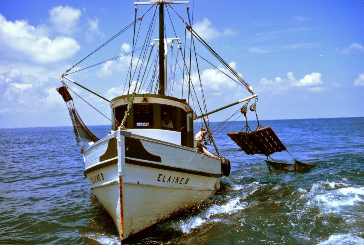 Gulf Shrimp Season Closing on Friday, May 15th