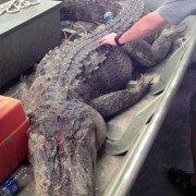 Texas Game Wardens Arrest Two Killeen Men in Alligator Death