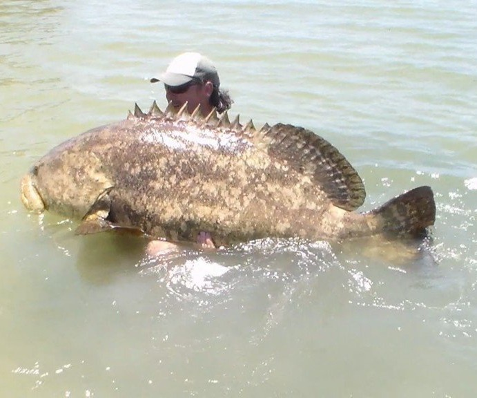Screaming kayak angler catches giant goliath grouper (VIDEO)