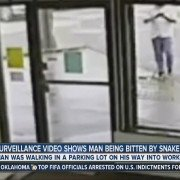 Oklahoma Man Gets Bitten by Snake While Walking and Texting (VIDEO)