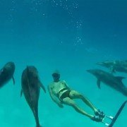 Video: Spearfisherman's Fake Tail Fin Draws in Dolphin Pod