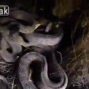Hiker stumbles upon massive snake pit while hiking