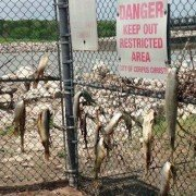 Flooding to blame for fish deaths near Wesley Seale Dam