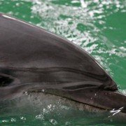 After Shooting Dolphin, Texas Brothers Banned from Hunting