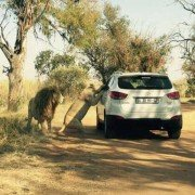 Chilling photo captures woman's final moments before fatal lion attack