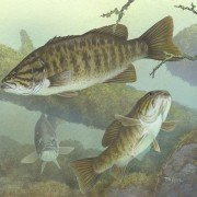 Quiz: How Much Do You Know about Bass and Bass Fishing?