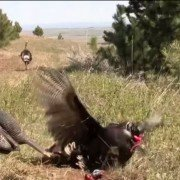 Video: This Is the Craziest Turkey Headshot You Will Ever See