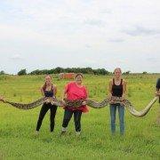Missouri Man Shoots 14-foot Python, Larger 18-footer Captured in Florida