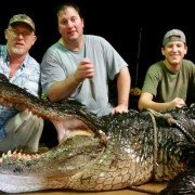 Record-breaking alligator pulled from Lake Eufaula, AL weighs in at 920 pounds