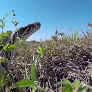 Florida gears up for new Python Challenge kick off (VIDEO)