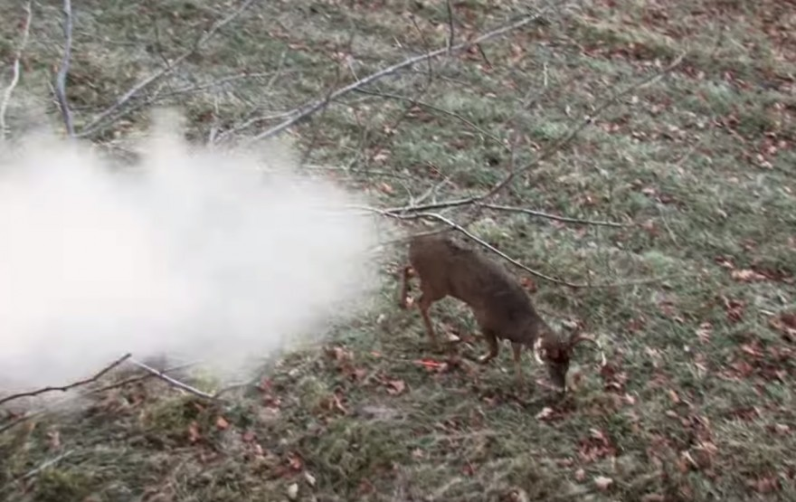 Deer Shrugs Off Point-blank Muzzleloader Shot (VIDEO)
