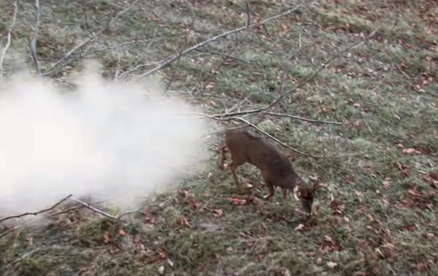 Deer Shrugs Off Point-blank Muzzleloader Shot (VIDEO)