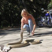 Police: 8-foot King Cobra on the Loose in Orlando