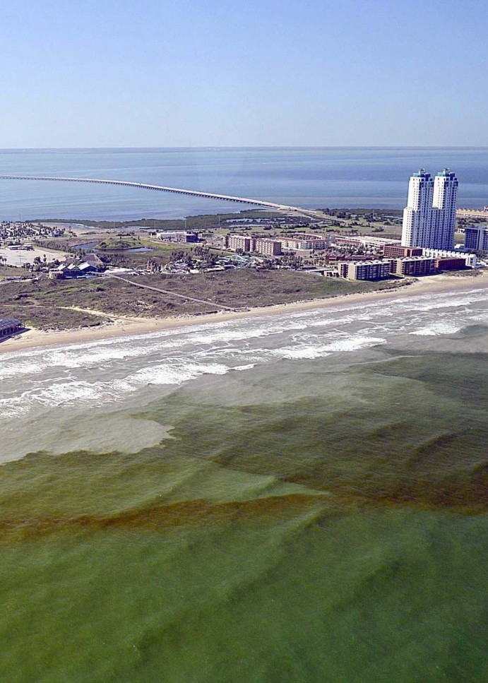 Red Tide continues to dissipate in the Gulf