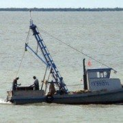 Lavaca Bay closed to oystering
