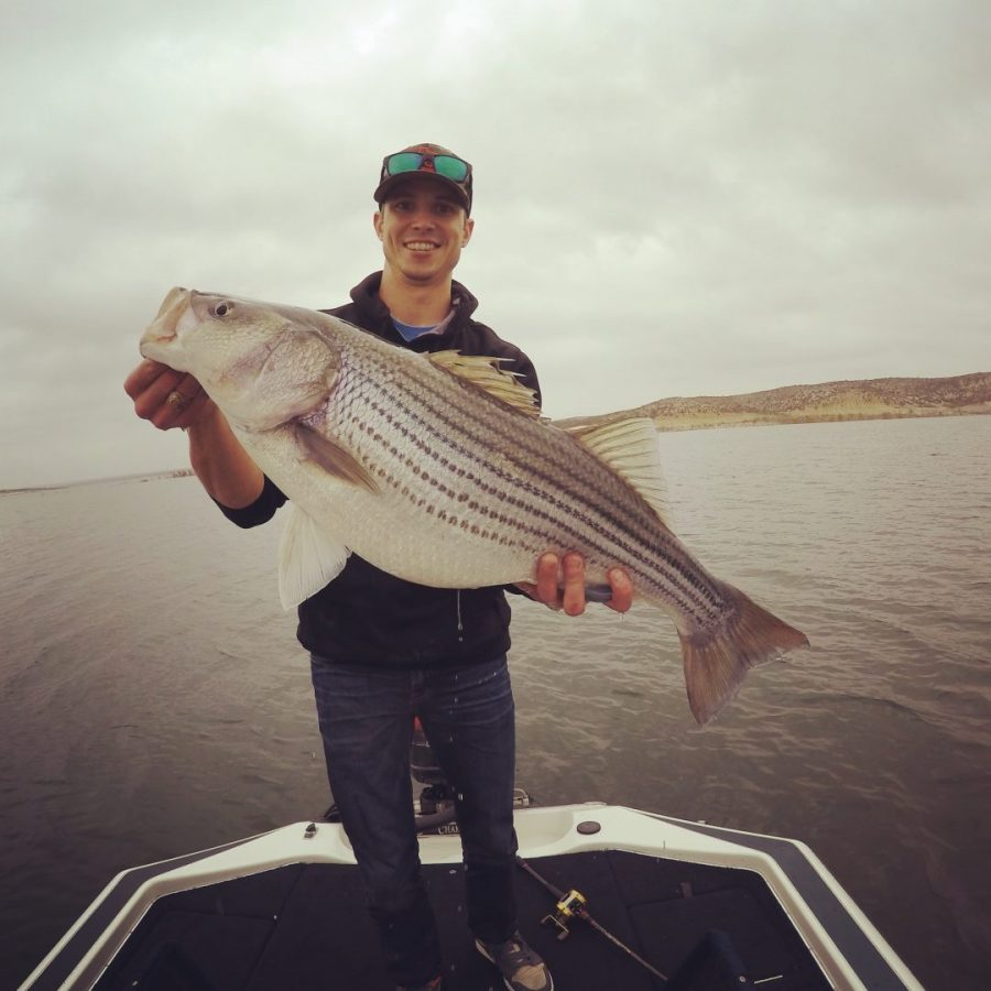 Lake Amistad Striper