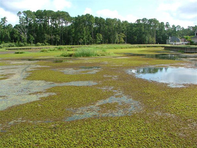 Containing giant salvinia in Lake Fork and other Texas lakes