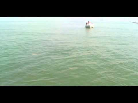 Sharks on topwaters! (video)