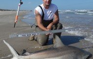Blacktip Shark at PINS