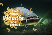 Using Your Noodle for Catfish