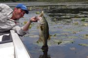 Sharelunker: Secrets of Giant Fall Bass and More