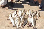 Galveston East Bay Fishing: Did you not get the message?