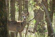 Hunting Natural for Deer Pt. 1