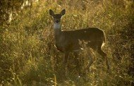 Did You Know the Rut has Little to do With Bucks?