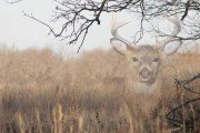 Bowhunting Invisible Bucks