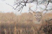Bowhunting Invisible Bucks
