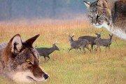 Predators & Population Control