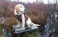 Pre Duck Season Checklist - Part 1
