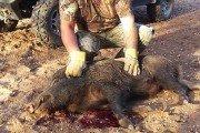 Texas Hotshots - Hog Time
