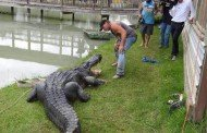 Record Alligator Caught Live in Texas