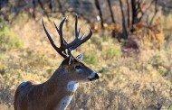 Hunting Natural for Deer Pt. 3
