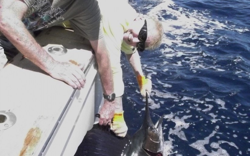 Texas Hotshots - 28 Sailfish in Two Days