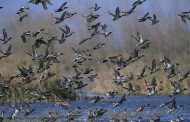 Waterfowl Hunting Season Gets Underway