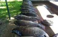 Mmm…Tilapia and Bowfishing Fun