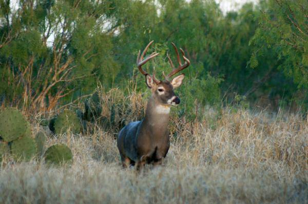 More dove days for this year's hunting season; significant expansion deer hunting opportunities