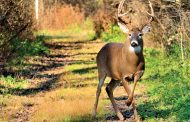 Extended Hunting Seasons Provide Opportunities to Fill Deer, Turkey Tags